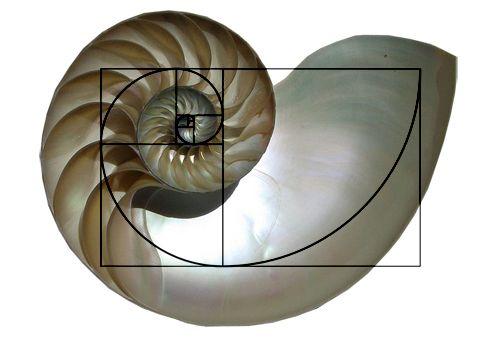 shell_spiral